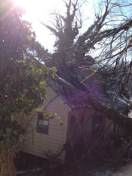 This is the tree that happen to land on our home during one of the