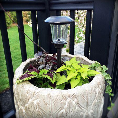 Light in a flower pot