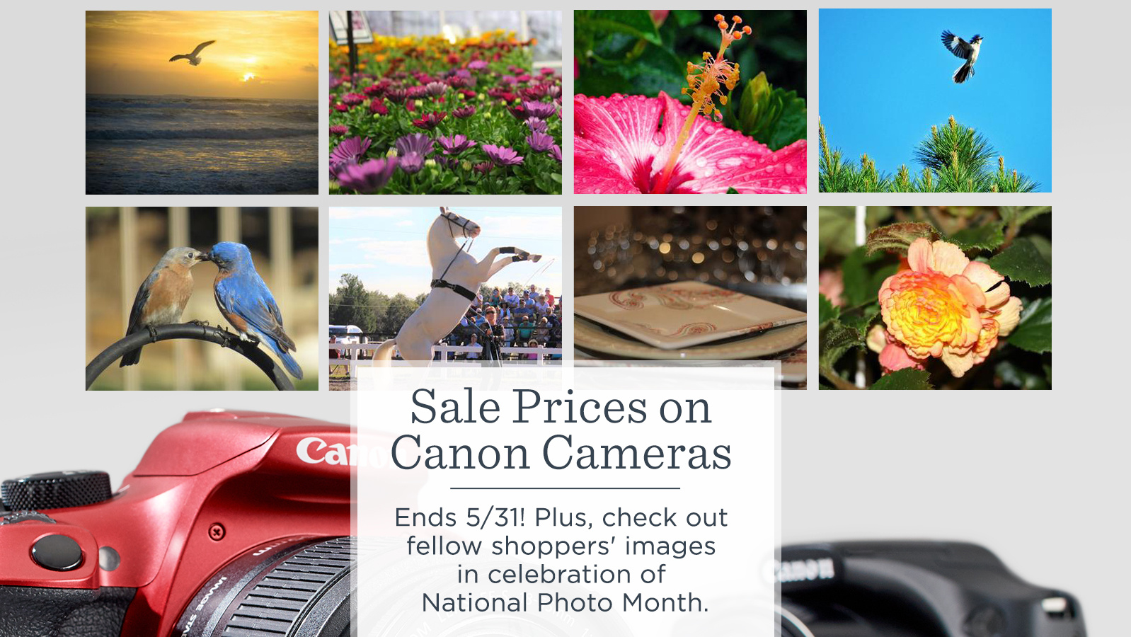 Sale Prices on Canon Cameras.  — Ends 5/31! Plus, check out fellow shoppers' images in celebration of National Photo Month.