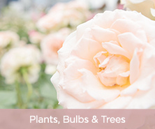 Plants, Bulbs & Trees