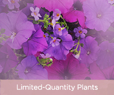 Limited-Quantity Plants