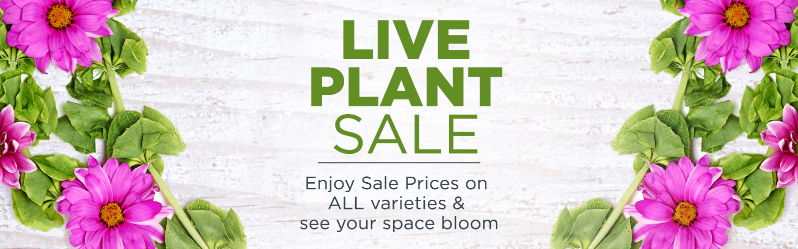 Live Plant Sale.  Enjoy Sale Prices on ALL varieties & see your space bloom.