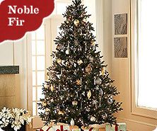 Bethlehem Lights Ready Shape Noble Fir tree with instant power