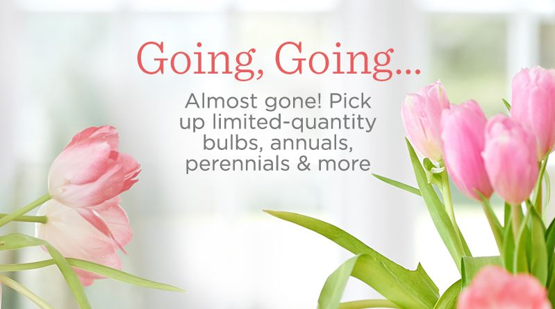 Going, Going…  Almost gone! Pick up limited-quantity bulbs, annuals, perennials & more