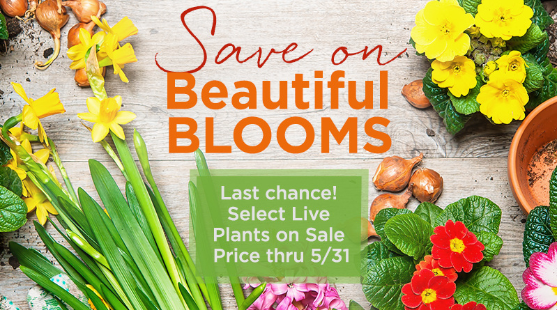 Save on Beautiful Blooms Last chance! Select Live Plants on Sale Price thru 5/31