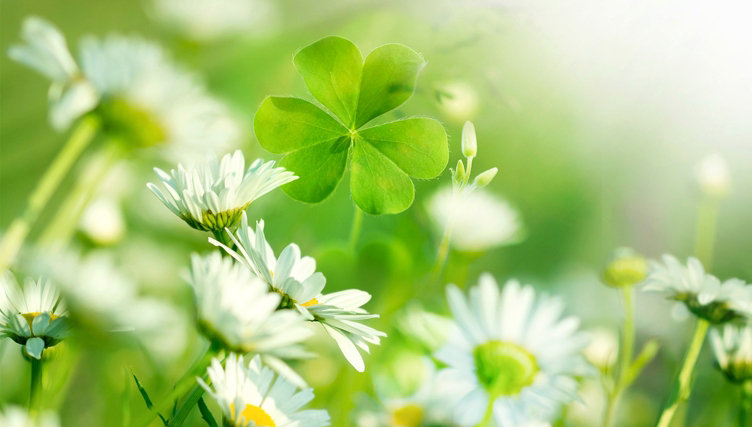 St. Patrick's Day. Celebrate all things Irish with these imports