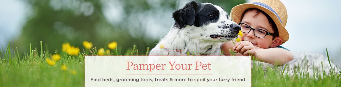 Pamper Your Pet. Find beds, grooming tools, treats & more to spoil your furry friend