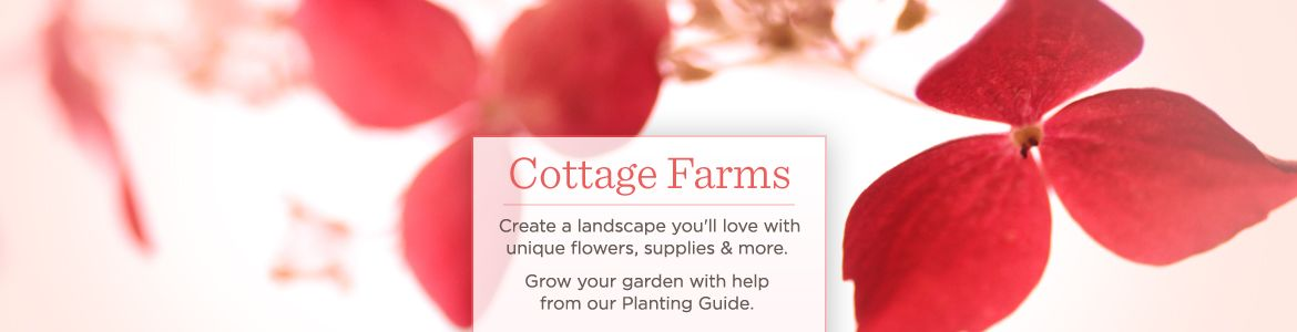 Cottage Farms Seeds Plants Gardening Supplies QVCcom