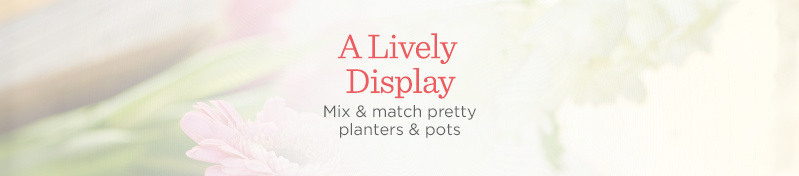 A Lively Display. Mix & match pretty planters & pots
