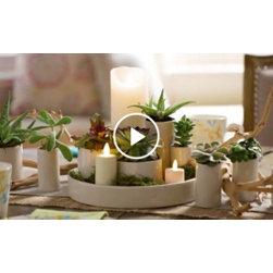 Succulents as Centerpieces