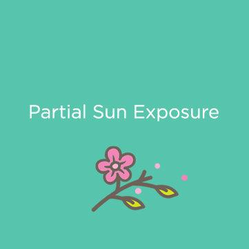 Partial Sun Exposure