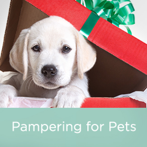 Pampering for Pets