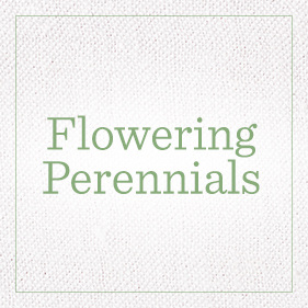 Flowering Perennials