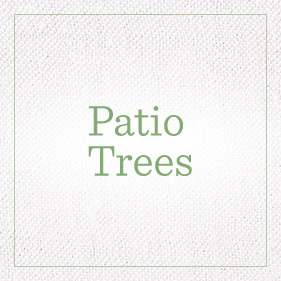 Patio Trees