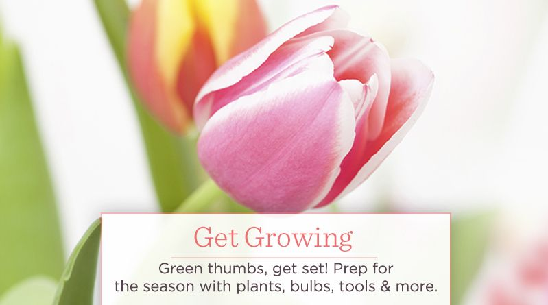 Get Growing. Green thumbs, get set! Prep for the season with plants, bulbs, tools & more.
