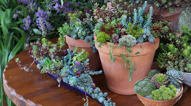 Bring out your green thumb—it's time to get planting! Enjoy easy-care succulents for color, texture & liveliness indoors or out. Plus, grow your own vegetables & make backyard-to-table a part of your menu.