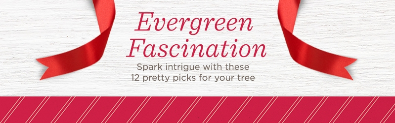 Evergreen Fascination. Spark intrigue with these 12 pretty picks for your tree.