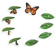 Giant Magnetic Butterfly Life Cycle by LearningResources - T125705