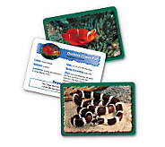 Animal Classifying Cards Combo Pack by LearningResources - T114027