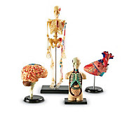 Anatomy Models Set by Learning Resources - T120855