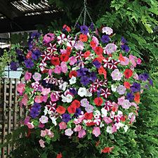 509416 - Thompson & Morgan 48 x Petunia Easy Wave Ultimate Mix Plug Plants