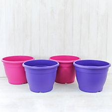 Thompson & Morgan Patio Pot Collection 2 Pink & 2 Purple