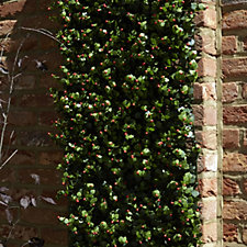509922 - Garden Reflections 8 Panel 2m sq Faux Berries & Greenery Living Wall