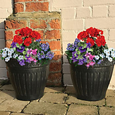 Plants2Gardens 20 x Summer Colour Plug Plants & 4 Decorative Planters