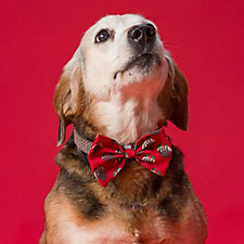 House of Paws Christmas Pet Bow Tie