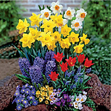 508650 - de Jager 100 x Complete Spring Garden Bulb Collection