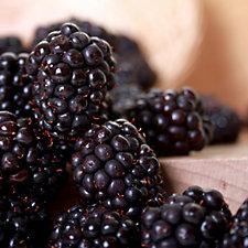 Hayloft Plants 3 x Blackberry in 9cm Pots