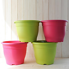 Thompson & Morgan 4 x Autumn Shades Patio Pot Collection