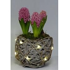 513787 - Hayloft Plants Hyacinth in Decorative Basket with Lights