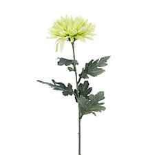Peony Set of 5 Green Chrysanthemum Stems