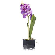 705243 - Peony Vanda Orchid in Black Cube