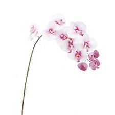 Peony Set of 2 Pink Phalaenopsis Orchid Stems