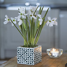 Peony Snowdrops in Ceramic Tile Effect Cube