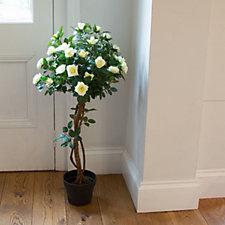 706960 - Peony Rose Tree