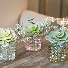 Peony Set of 3 Succulents & Eucalyptus in Textured Glass