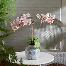 708067 - Peony Phalaenopsis Orchids in Blue & White Pot