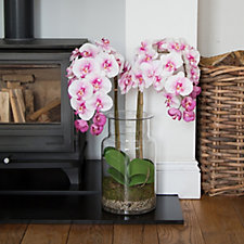Peony Large Phalaenopsis Orchid in a Contemporary Vase