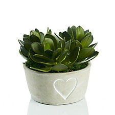 Peony Succulents in Cement Heart Bowl