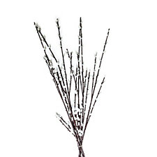 Peony Set of 6 Pussy Willow Stems