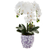 22 Orchid in Ceramic Pot by Valerie - H210614
