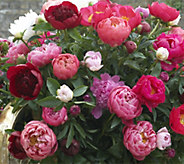 Robertas 3-Piece Bounty of Blooms Victorian Peony Collection - H310422