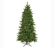6-1/2 Camdon Fir Slim Tree by Vickerman - H142934