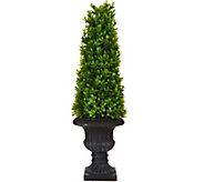 21 Boxwood Topiary with Urn by Valerie - H213737