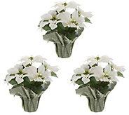 Anniversary Set of (3) 18 Faux Poinsettia Plants by Valerie - H215339