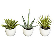 Set of 3 Southwest Collection by Nearly Natural - H357342