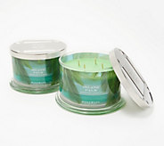 HomeWorx by Harry Slatkin Set of 2 Deluxe Island Palm 4-Wick Candles - H217743